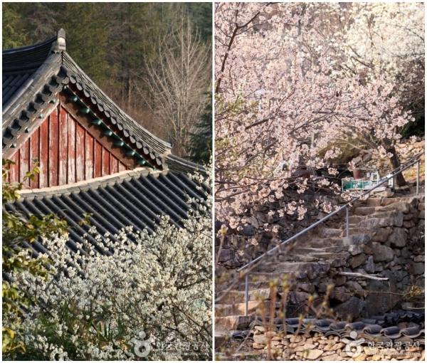 순천 금둔사 ⓒ대한민국구석구석.한국관광공사