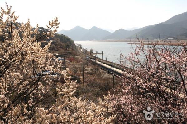 양산 순매원 ⓒ대한민국구석구석.한국관광공사