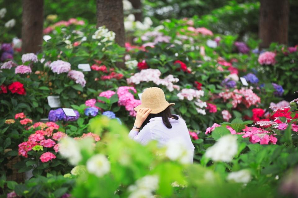 가평 아침고요 봄나들이 봄꽃축제 ⓒ아침고요수목원