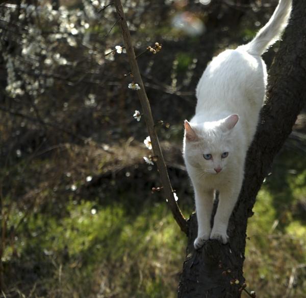 광양 매화나무 빛 사이의 고양이. 사진_조현주