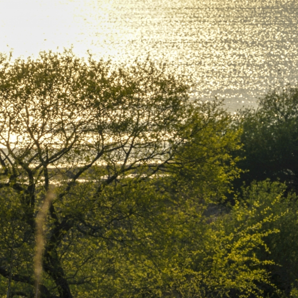 햇빛 받아 반짝이는 우포 늪 나무. 사진_조현주