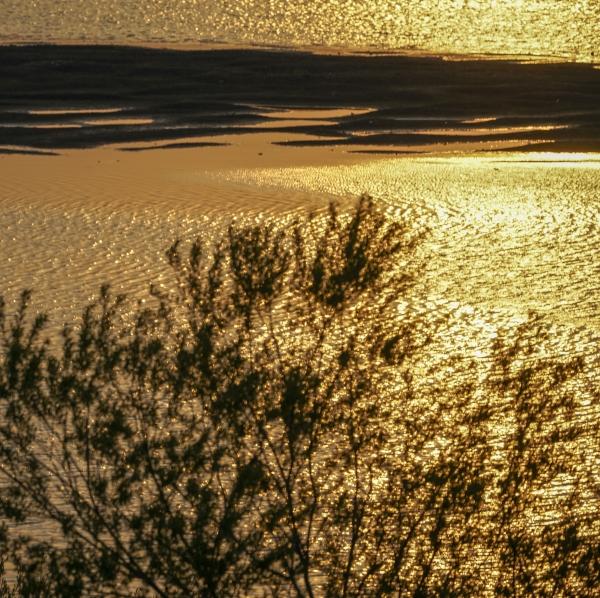 해질 무렵 황금 빛으로 변한 우포 늪 나무. 사진_조현주