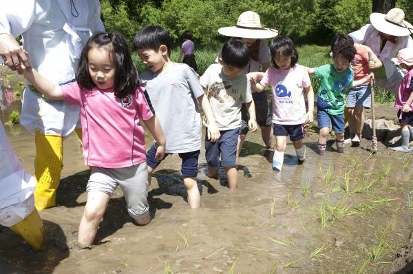21일 서울 강남구 양재천 벼농사 학습장 열린 '전통 모내기 체험'에 참여한 어린이들이 모를 심기 위해 논으로 들어가고 있다.