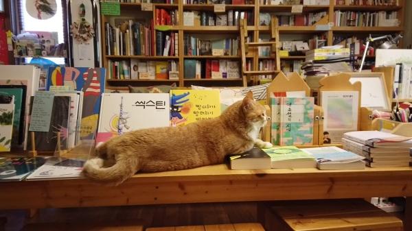 책방 명물 중 하나인 고양이 나비가 신간 서적을 베고 누워 있다. ©여성신문