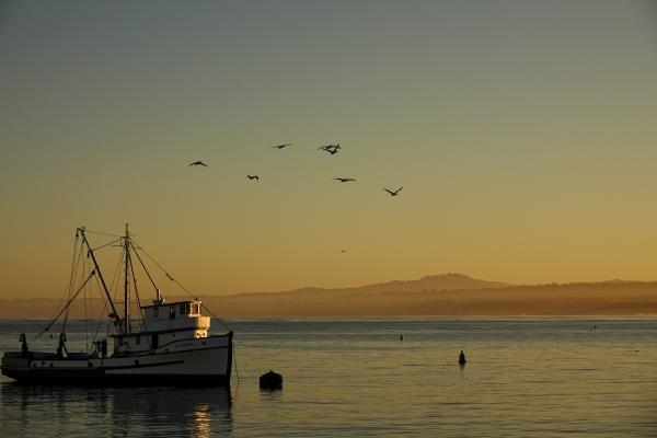 새벽 햇빛에 반짝이는 낚시 배. 사진_조현주