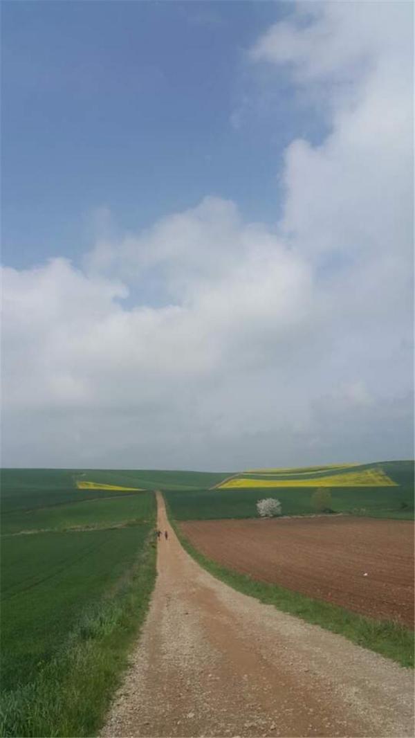 밀밭과 유채밭이 끝없이 펼쳐져 있다. ©심재혁