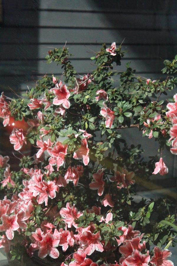 황예지 작가의 '꽃' ⓒ이민지 큐레이터