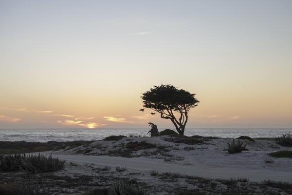 해풍에 휘어진 가지가 선명한 석양 빛 속 사이프러스나무. 사진_조현주