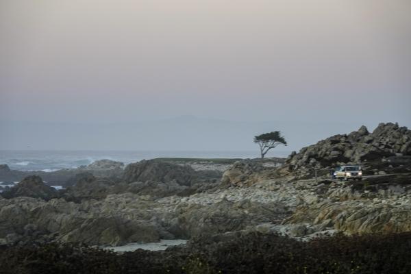 아련한 하늘 빛 사이, 사이프러스나무와 바다를 감상하고 있는 자동차. 사진_조현주