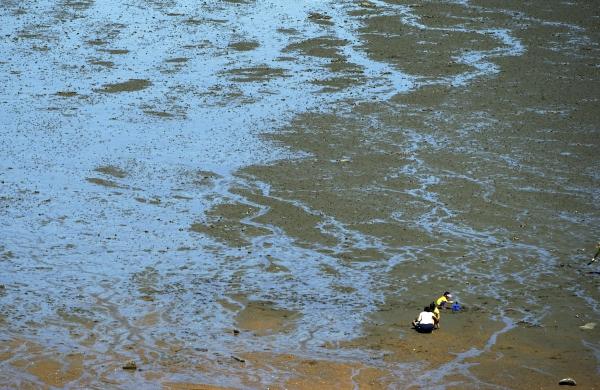 물이 빠진 무의도 갯벌에서 조개를 캐고 있는 가족. 사진_조현주