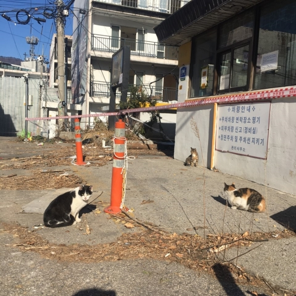 재건축이 한창인 경기 남양주시 호평동 진주아파트에 사는 고양이들. ©다스름82