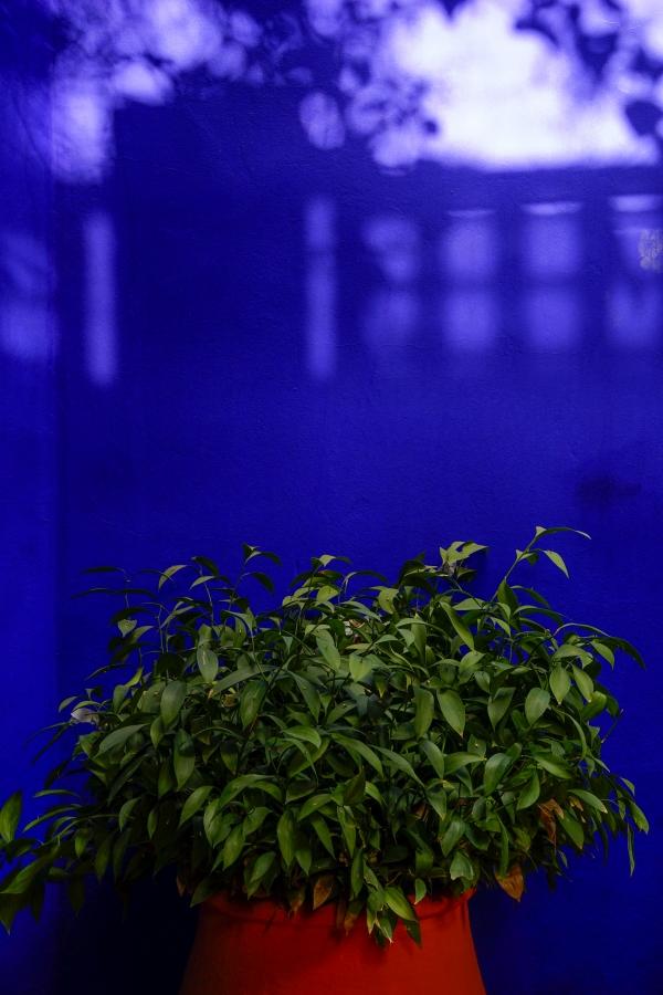 빛 그림자가 드리워진 '마조렐 블루' 담벼락에 빨간 화분과 초록잎이 어울려 상큼하다. 사진_조현주