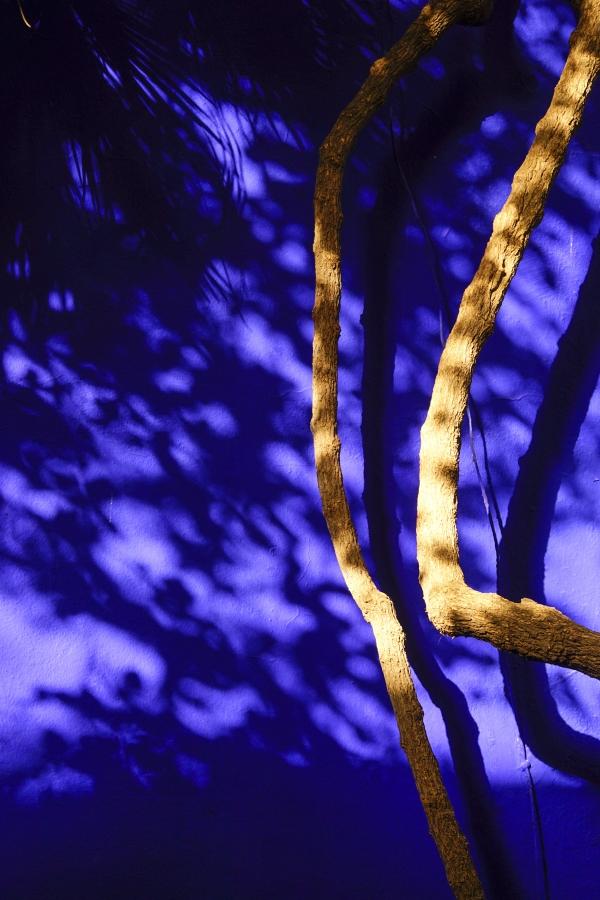 '마조렐 블루' 담벼락에 나뭇잎 그림자와 나뭇가지가 현란하다.   사진_조현주