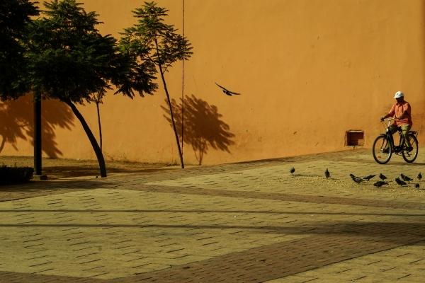 메디나 주황색 담벼락에 자전거 타는 행인과 비둘기, 나무 그림자가 묘하게 어울린다.  사진_조현주