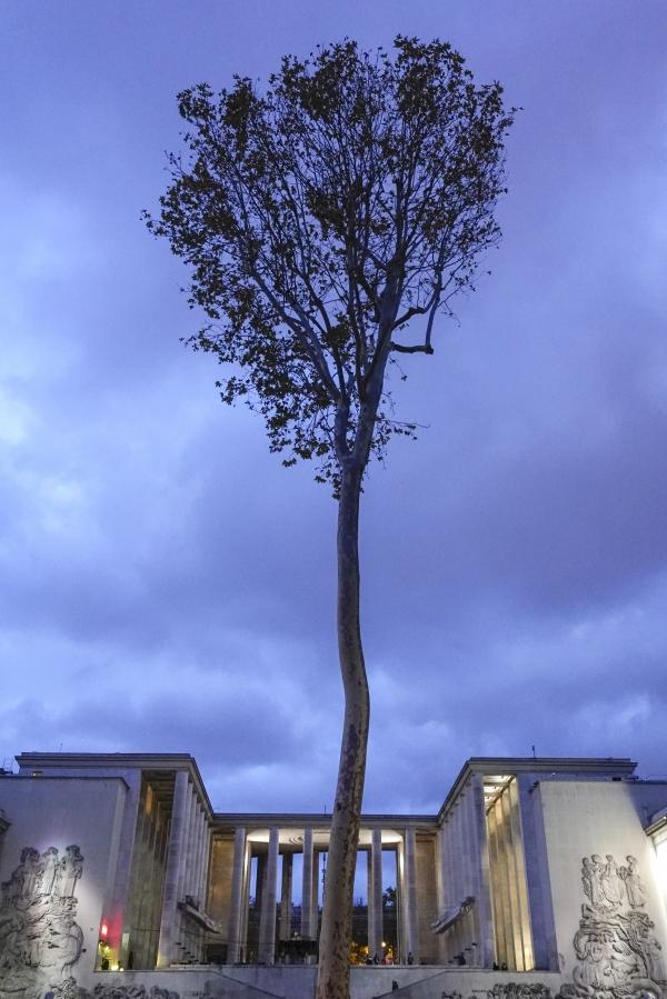 기념관을 배경으로 나홀로 나무가 외롭게 우뚝 서있다 (프랑스 파리). 사진_조현주