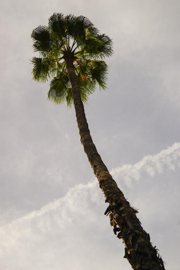기다란 야자수가 구름을 뚫을 듯이 솟아 있다 (모로코 마르케쉬) . 사진_조현주