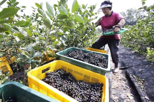 농림축산식품부는 '2017년 여성 농업인 육성 시행계획'을 마련해 총 3553억원을 투입한다. ⓒ뉴시스·여성신문