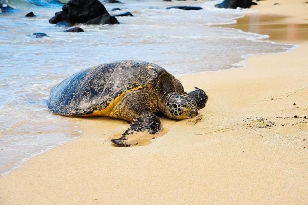 해변의 거북이 ⓒpixabay