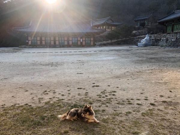 현덕사에 살고 있는 강아지 '현덕' ⓒ여성신문 진혜민 기자