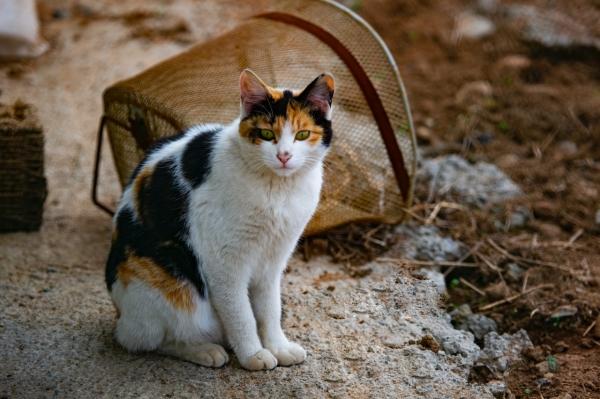 겁이 많은 영역 동물인 고양이는 집을 나서는 순간 위험이 도사린 남의 영역으로 들어가는 것이고, 혼비백산해 점점 집에서 멀어진다. 이런 고양이 세계에 탐정이 존재한다는 사실이 이젠 당연하다 생각된다. ©KIM DAE JEUNG from Pexels