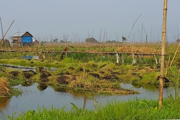 인레 호수 위에 인공으로 만든 밭 쭌묘. ©조용경