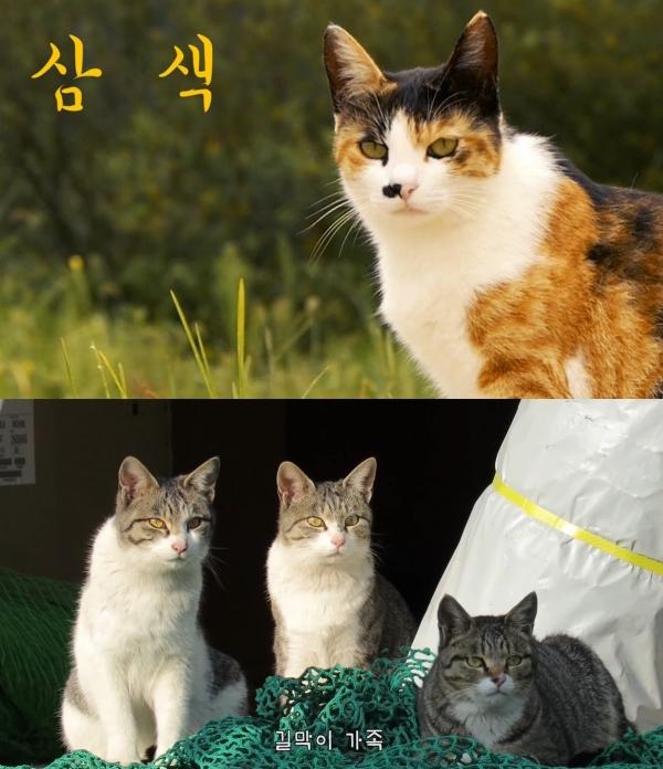 ⓒ유튜브 채널 'Haha ha' 캡처 ⓒ유튜브 채널 'Haha ha' 캡처