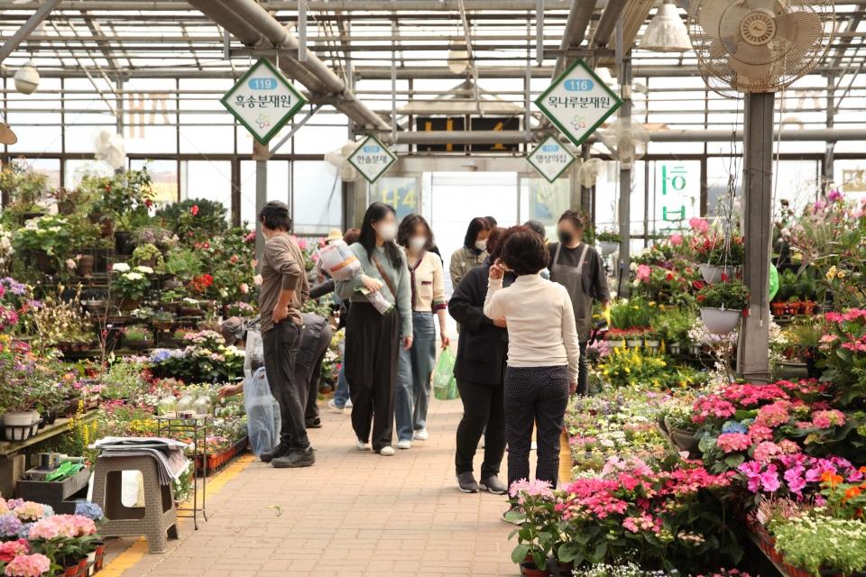 24일 오후 서울 서초구 양재꽃시장에 시민들은 봄 날씨로 화사하게 핀 꽃과 화분을 둘러보고 있다. ⓒ홍수형 기자