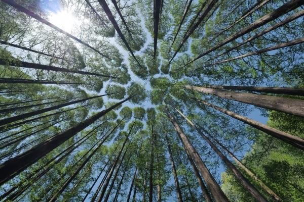 최근에는 식목일을 앞당겨야 한다는 논의도 나오고 있다. ⓒPixabay