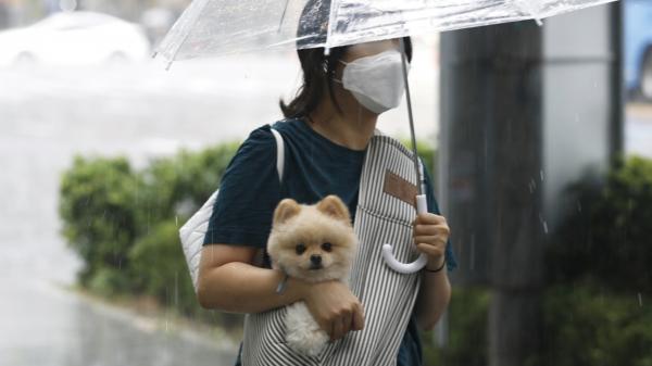 서울 종로구 광화문네거리 인근에서 갑자기 내린 소나기에 강아지가 주인 품에 안겨 비를 피하고 있다. ⓒ뉴시스