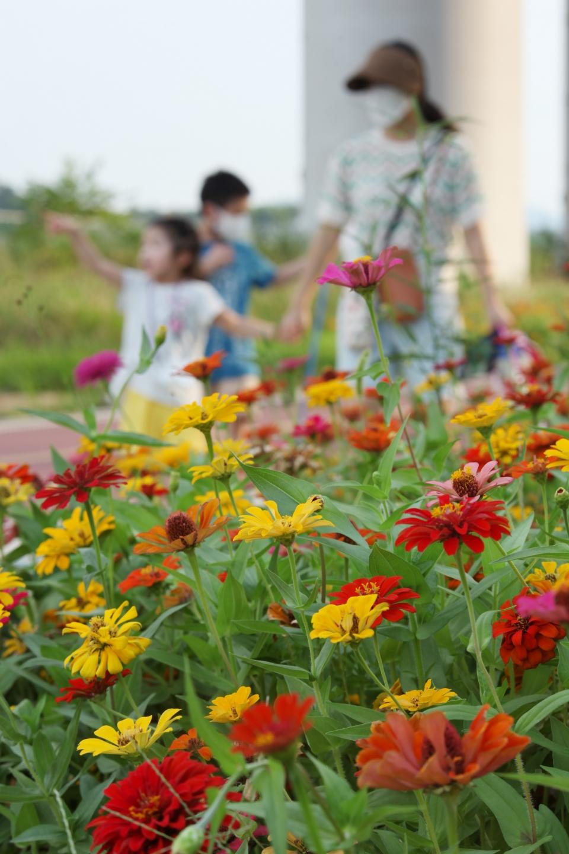 '백일홍 만개.. 꽃말은 '행복''<br>'행복'의 꽃말을 가진 백일홍이 3일 서울 성동구 중랑천 산책로에 활짝 피어 아이들과 어머니가 산책을 즐기고 있다. ⓒ홍수형 기자