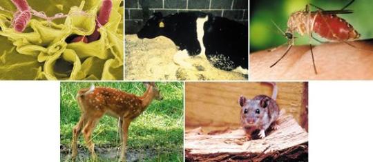 환경전염병은 인간의 개입으로 생태계가 교란돼 발생한다. 주로 포식자가 없는 동물이나 곤충 등에 의해 발생하는 경우가 많다.   sumatriptan 100 mg sumatriptan 100 mg sumatriptan 100 mg