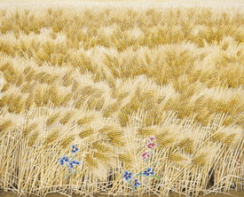 '황금보리밭'(2007)