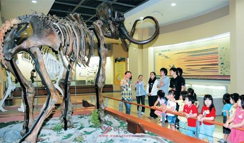 창의·인성교육은 교과와 체험활동이 융합된 교육이다. 6월 30일 서울 서대문자연박물관을 찾은 어린이들이 생명진화관에서 긴털매머드 공룡 표본을 관찰하고 있다.   sumatriptan patch http://sumatriptannow.com/patch sumatriptan patchsumatriptan 100 mg sumatriptan 100 mg sumatriptan 100 mg
