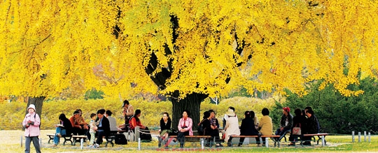 세상이 온통 가을 색으로 물들어 가고 있다. 수백 년 고궁을 지켜온 은행나무는 은은한 노란 빛으로 사람들에게 휴식을 준다.   gabapentin generic for what http://lensbyluca.com/generic/for/what gabapentin generic for what