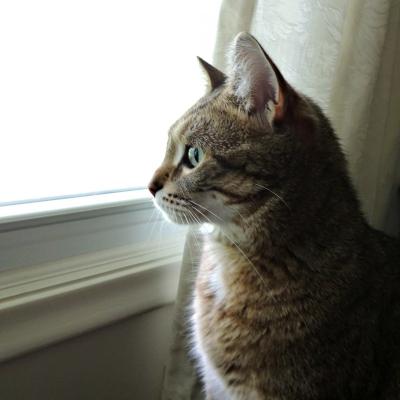 창밖을 바라보는 고양이 ⓒpixabay