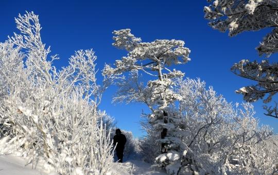2일인 오늘은 전국이 맑고 포근하겠다. 사진은 맑은 날 겨울 태백산의 풍경. ⓒ뉴시스·여성신문