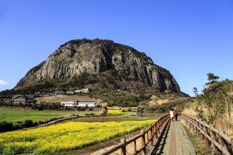 유채꽃밭 너머에 서있는 산방산 ⓒ한국관광공사