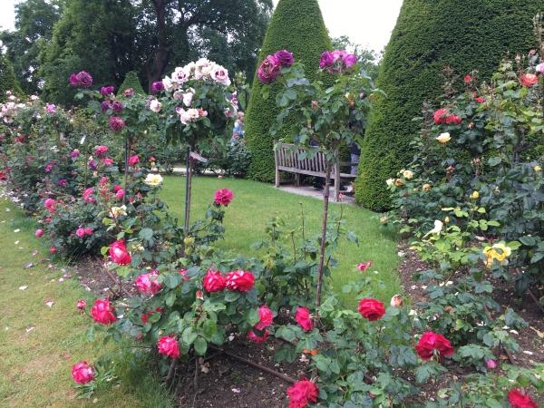 프랑스 파리의 로뎅박물관 내 장미 정원 ⓒ김경애 편집위원