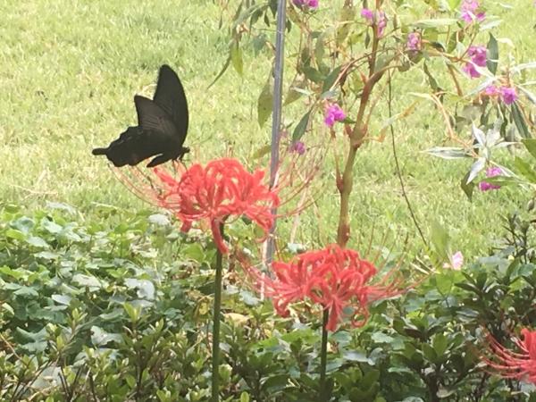 나비 ⓒ김경애 편집위원