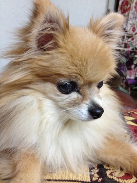 우리 강아지 뭉치 ⓒ김경애 편집위원