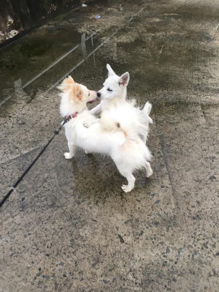 이웃집 강아지 뭉치와 친구 ⓒ김경애 편집위원